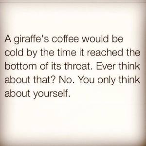 giraffe, coffee