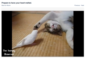 melted heart