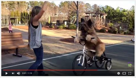 dog-riding-a-bike